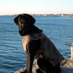 Sea Duck hunting RI,MA and ME